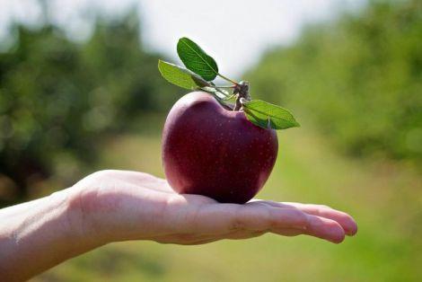 Корисні властивості яблук для вашого здоров'я
