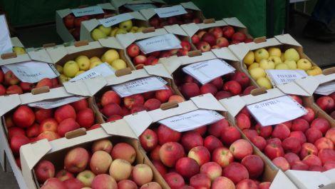 Яблука, які не гниють