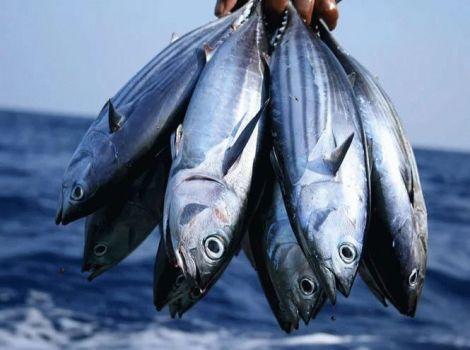 Яку рибу краще не вживати в їжу?