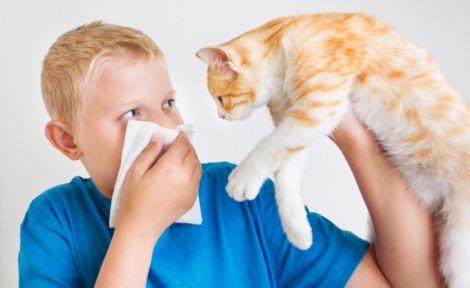 Алерген міститься в слині та сечі кота