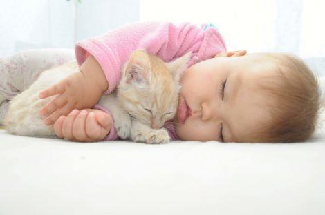 Коти провокують астму у дітей