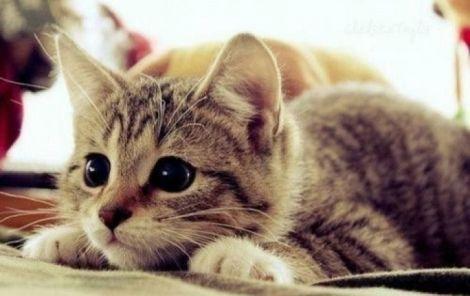 Хвороби, які вилікує кішка