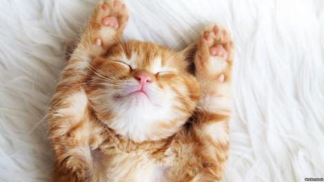 Які хвороби коти передають людині?