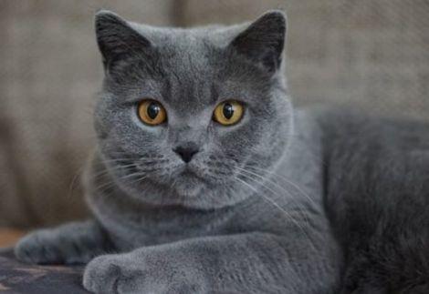 Коти лікують хвороби