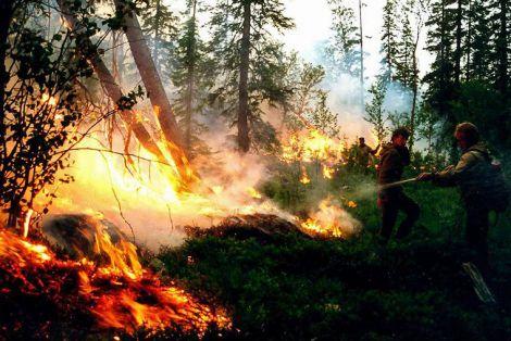 Шкода пожеж для дихання та серця