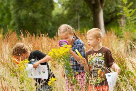 Природа та дерева корисні для школярів