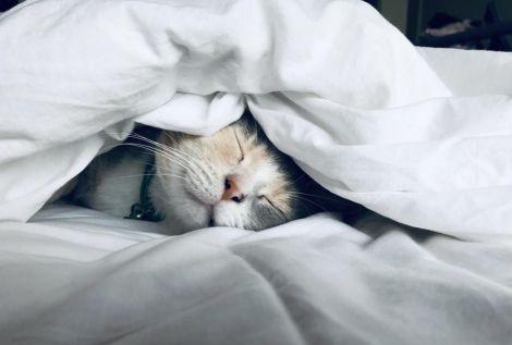 Чому небезпечно застеляти ліжко вранці?