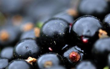Чорна смородина - протизапальний засіб