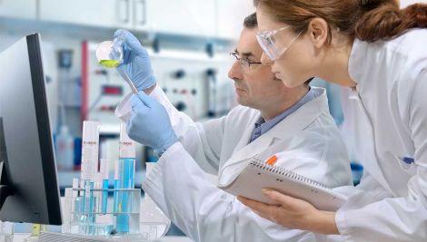 Вчені виростили нирки