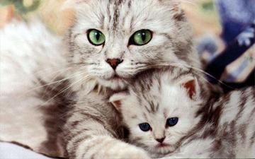 кішки вважаються найкращими цілителями серед тварин