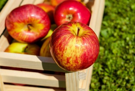 Яблука для краси та здоров'я
