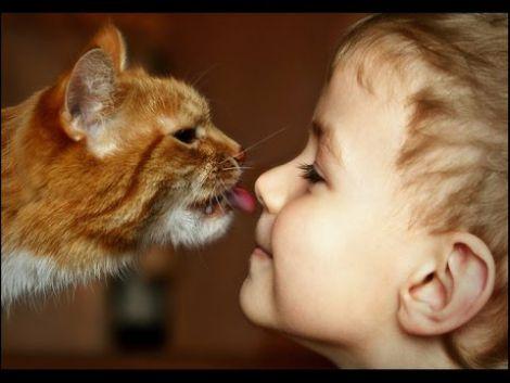 Тварини лікують від недуг