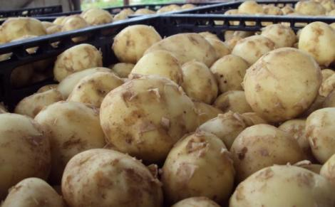 Варіть таку картоплю 30 хвилин
