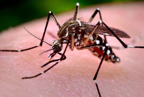 Комарі та коронавірус