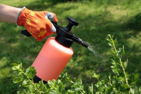 Пестициди у продуктах викликають безпліддя