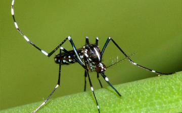 науковці придумали як врятуватись від комарів