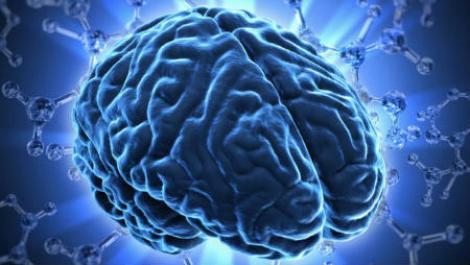 Менше справ водночас - більший мозок
