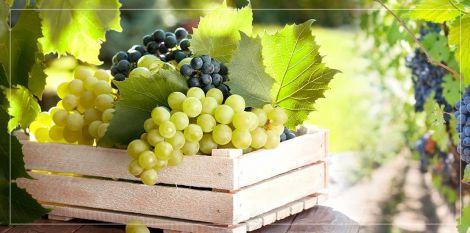 Виноград - ефективний засіб від проблем з серцем