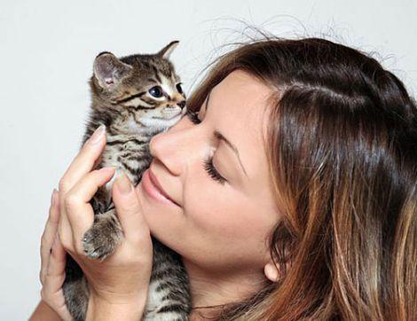 Обійми з котами
