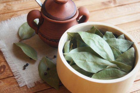 Настій з лаврового листя очистить підшлункову