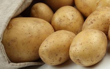 найбільше поживних речовин міститься у картоплі звареній в мундирі