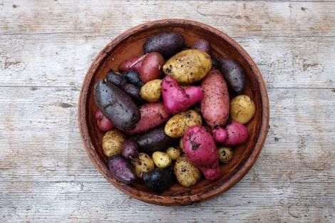 Синя, червона або біла: яка картопля найкорисніша?