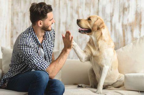 Домашні тварини на самоізоляції