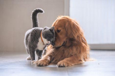 Самоізоляція з домашніми тваринами