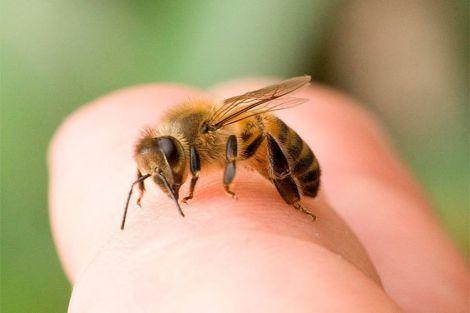 Лікування бджолиною отрутою