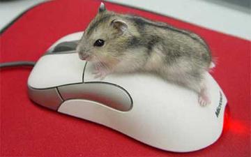 комп'ютерна мишка може позбавити руки чутливості