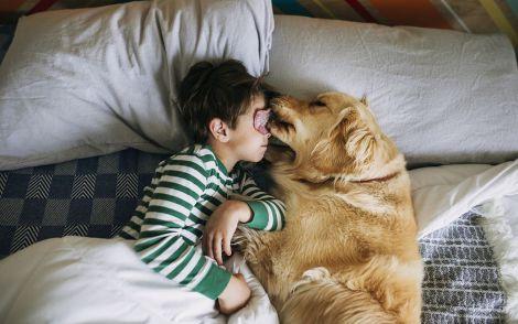 Користь життя з собаками