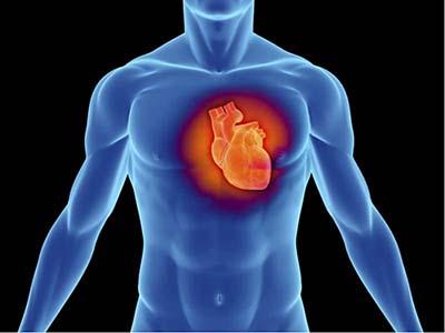 Факти про серце
