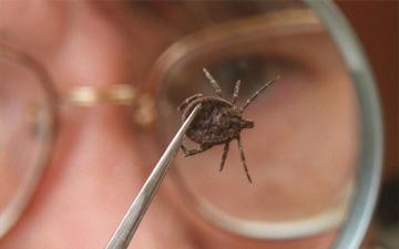 краще попередити укус кліща, ніж його лікувати