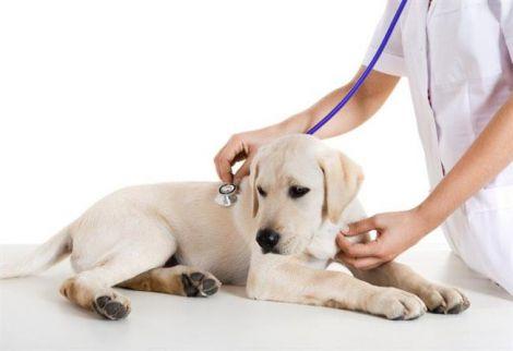 Діабетикам рекомендують заводити собак