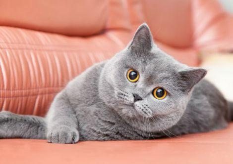 Лікування ВІЛ за допомогою кішок