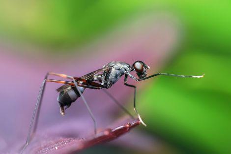 Кого частіше кусають комарі