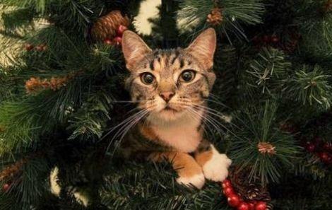 Ваш кіт також ненавидить ялинки?