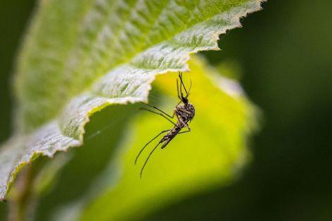 П'ять простих домашніх засобів від укусів комарів