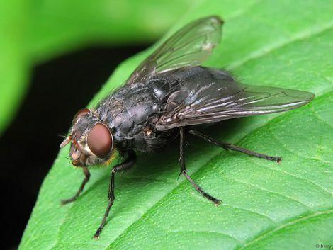 ТОП 3 простих та ефективних методи від укусів мух