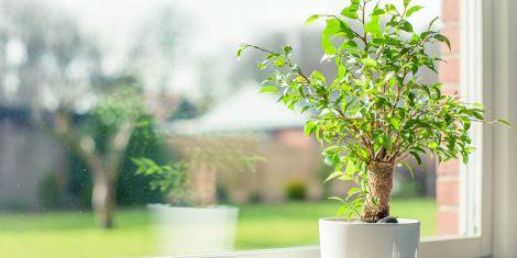 Рослини, які очистять повітря в кімнаті