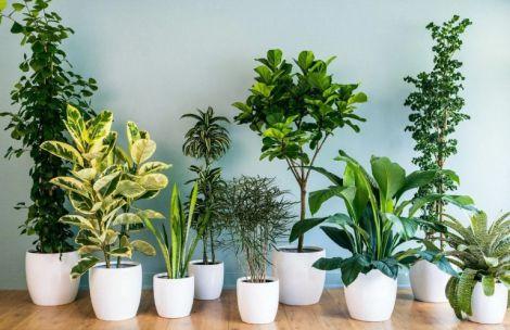 Рослини для очищення повітря