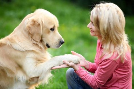 Власники собак менш схильні до стресів
