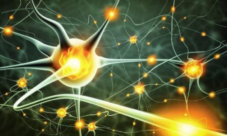 Клітини крові допоможуть у боротьбі зі старінням