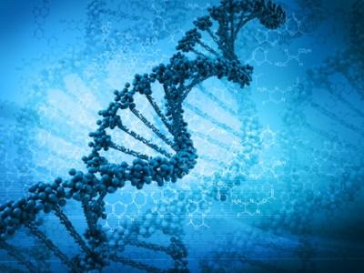 Кофеїн скорочує кінцеві ділянки хромосоми