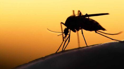 Лікування малярії