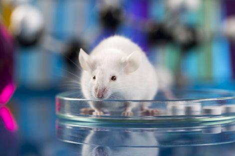 Вчені вперше знищили ВІЛ у живих клітинах