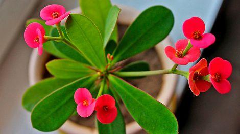 Агроном попередив про небезпеку деяких кімнатних квітів для дітей