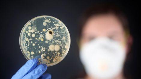 Бактерії: друзі чи вороги людини?