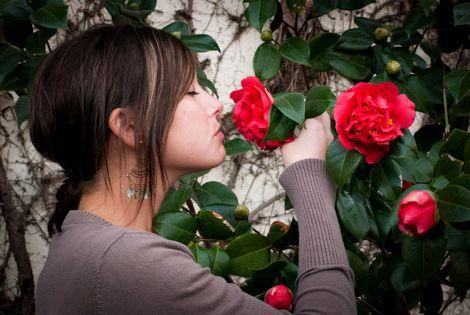 Запах троянд вбереже від ДТП