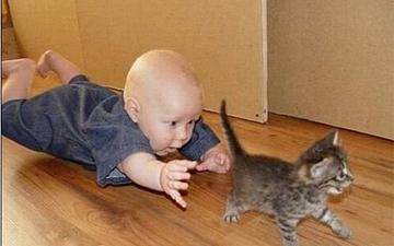 контакт з твариною дозволить уникнути алергії